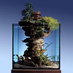 déco aquarium jardin japonais